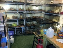 reptile rescue /haven in Camp Lejeune, North Carolina